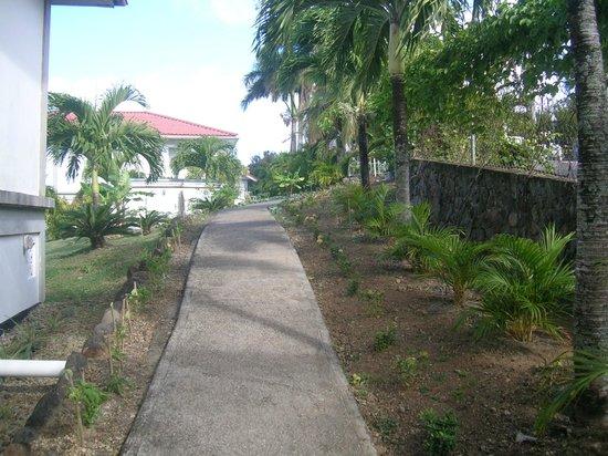 Caribbean Sea View Holiday Apartments : Garden