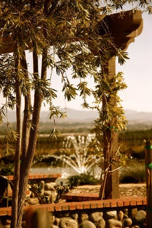 Ponte Vineyard Inn: view from our patio