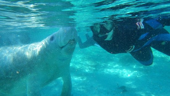 Manatees In Paradise: Photo courtesy of Captain Mike