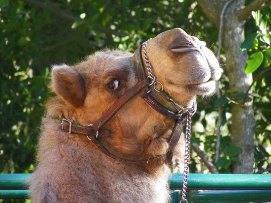 Naples Zoo at Caribbean Gardens: What day is it ? Hump Day !!!