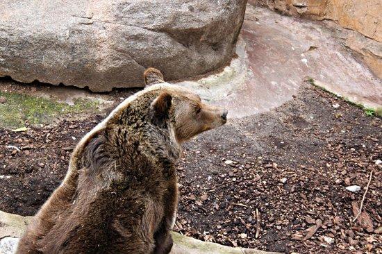 Zoo de Barcelona: Orso