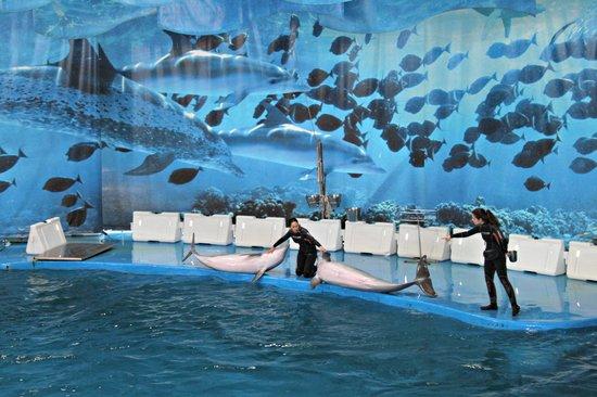Zoo de Barcelona: Il bellissimo spettacolo dei delfini