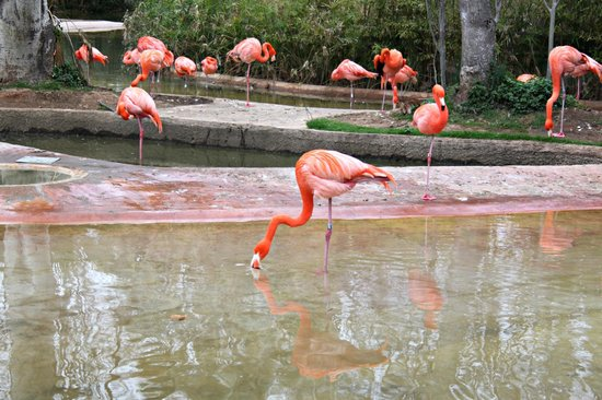 Zoo de Barcelona: Fenicotteri