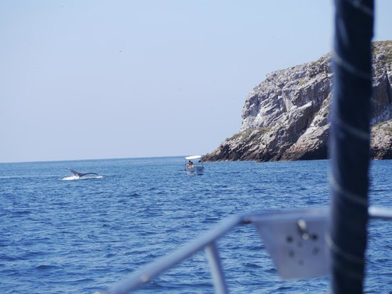Red Dolphin Sailing Charters : The Whales have come to watch the humans