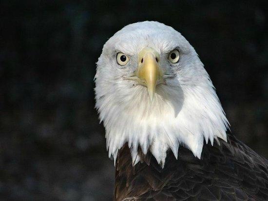 Brookgreen Gardens : eagle