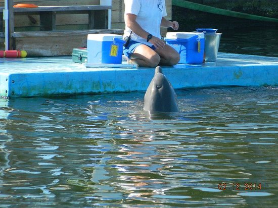 Dolphin Research Center : Training time