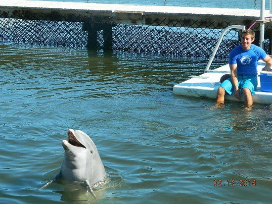 Dolphin Research Center : Jax saying hello