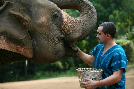 Patara Elephant Farm - Private Tours : Feed Time