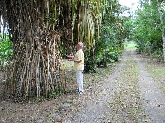 Tico Rainforest  B & B : In the main alley of Casa Araya