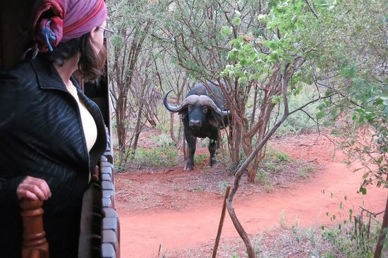 Mosetlha Bush Camp & Eco Lodge: An afternoon visitor to the camp