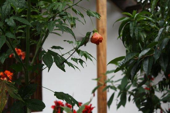 El Albergue Ollantaytambo: Garden/Hummingbird