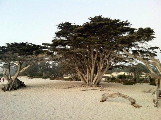 Carmel City Beach/Carmel River Beach: Praia em Carmel