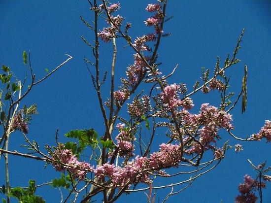 Tuko Beach Resort: Blühender Baum vor dem Fenster