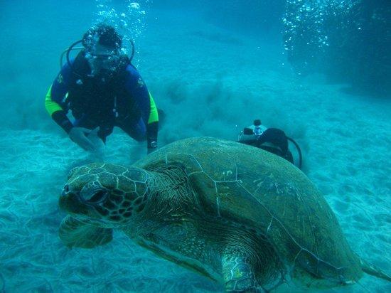 Buceo Isla de Pascua: tortuga verde