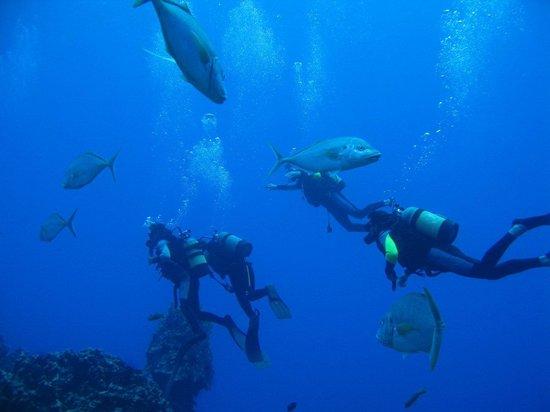 Buceo Isla de Pascua : azul azul