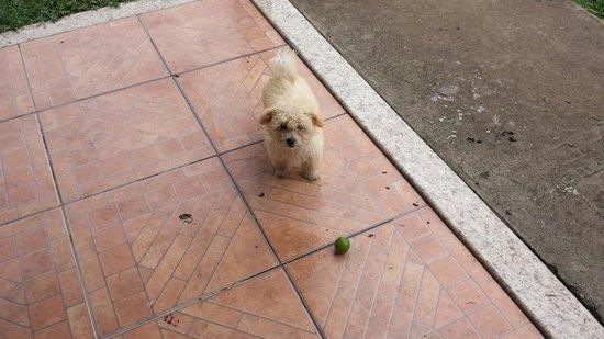Pousada Remanso do Rio Preto: Esse é o Scott o mais novo membro da família!