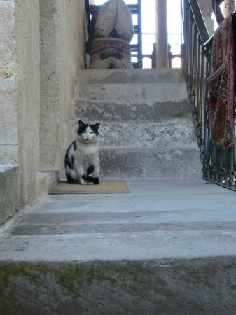 Hotel Cave Konak : The hotel's cat
