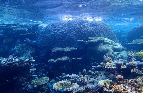 Park Hyatt Maldives Hadahaa : Kaashidhoo reef (south of Park Hyatt)