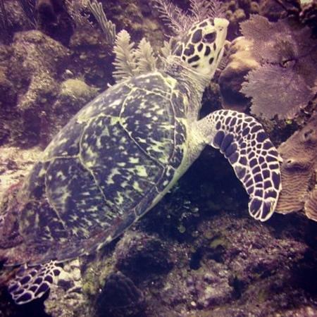 Splash Dive Shop: :)