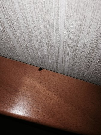 Elk Grove Hotel: The bug that was in our room