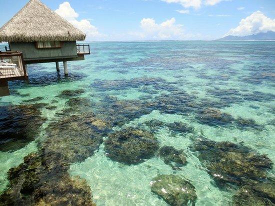 Le Meridien Tahiti : gorgeous lagoon