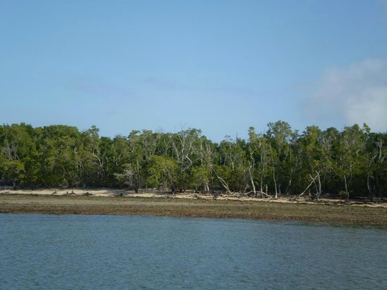 Everglades Area Tours: Beautiful Everglades Scenery.