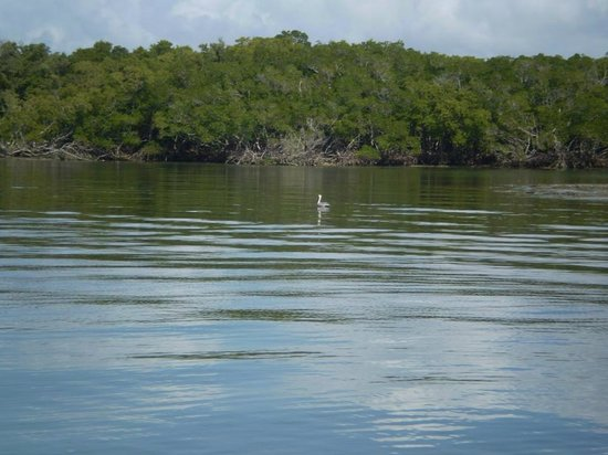 Everglades Area Tours: Beautiful scenery and a big white bird.