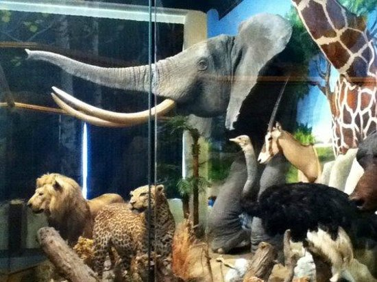 Dacotah Prairie Museum: Wildlife Exhibit
