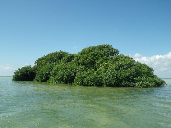 Espacio Natura : mangrove