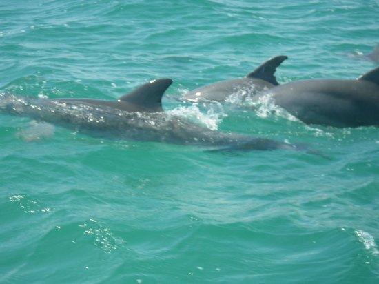 Espacio Natura : dauphins