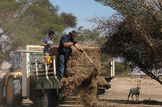 Hai Bar - Wildlife Reserve : Feeding time