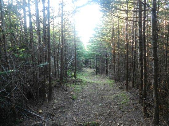 Abbie's Garden Bed & Breakfast: walking path