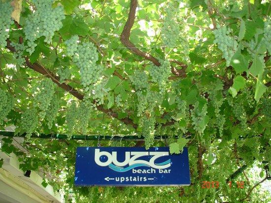 Buzz Bar: Виноградная терраса ресторана.