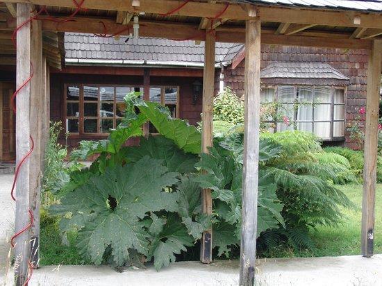 Hosteria Catalina: Las Nalcas gigantes a la entrada de la casa...