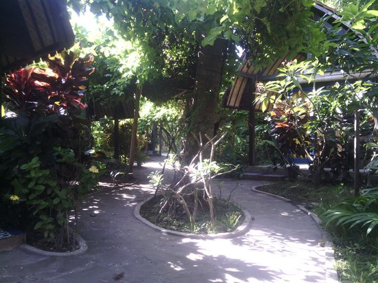 Wood Stock Home Stay: this our garden look like...