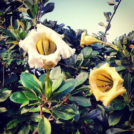 Chalet Tropical Village: Beautiful Flora/Fauna