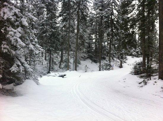 Natur & Spa Hotel Laerchenhof: Nearby woods