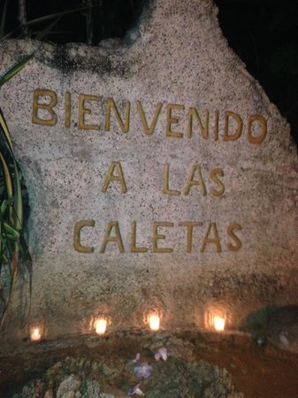 Rhythms of the Night by Vallarta Adventures: Welcome!