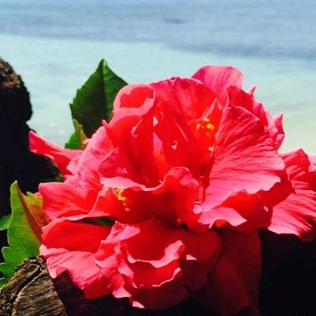 Club Med La Pointe aux Canonniers : un sogno di giardino