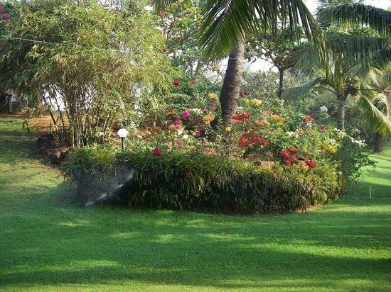Chalston Beach Resort : Beautiful flowers in garden