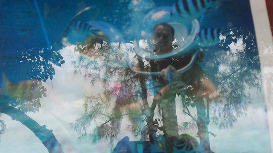 Sous Le Badamier : marche sous l'eau