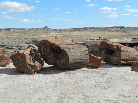Rainbow Forest: Petrified Wood along the trail at the Visitor's Center