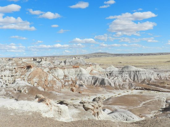 Rainbow Forest : Some of the beautiful scenery at Petrified Forest National Park