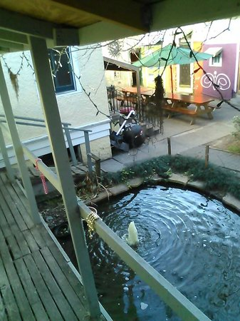 India House Hostel: view from our private room of the goldfish pond and the dining areas
