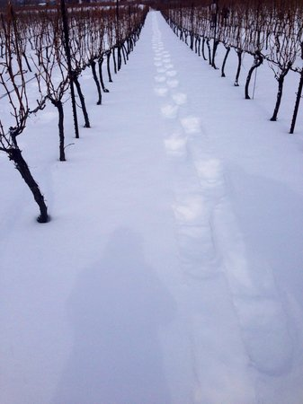 Thirty Bench Wine Makers: Snowshoe prints