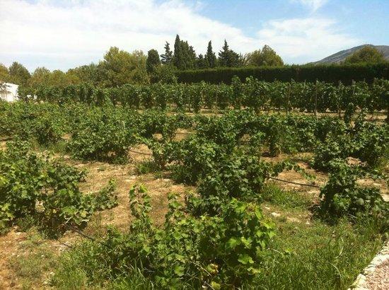 Bodegas Enrique Mendoza: the grounds