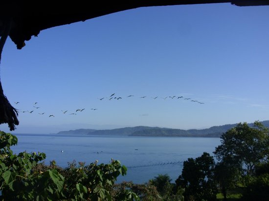 Vista Drake Lodge: pelicans flying by