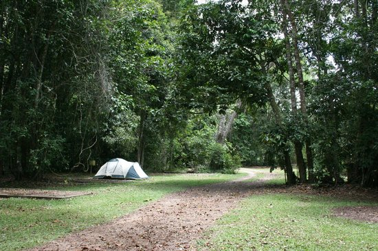 Kingfisher Park Birdwatchers Lodge: Campground