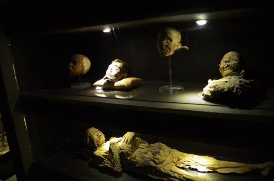 Museo de las Momias de Guanajuato: Exposición a febrero del 2014.