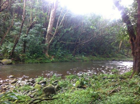 Kayak Kaua'i : idyllic forest stream along the hike